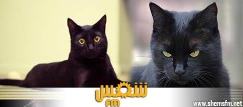 عالمي Italie servait chats rôtis invités media_temp_139124459
