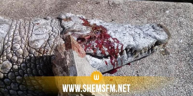 Zoo Le Belvédère : des visiteurs tuent un crocodile