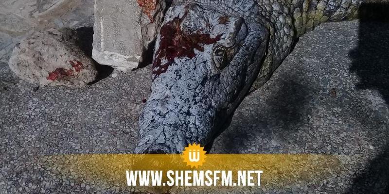 Le crocodile du Belvédère est mort noyé après avoir été frappé à la tête