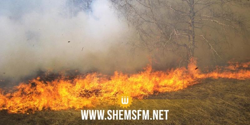 زعوان: حريق يأتي على 150 هكتارا من الزراعات الكبرى بمنطقة الشوايحية