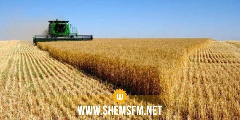 بنزرت: زيادة بحوالي 400 ألف قنطار في صابة الحبوب