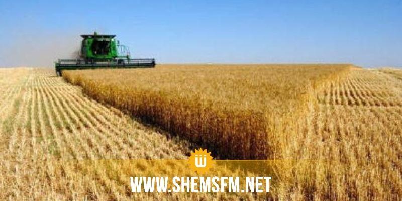 Bizerte : hausse de 400 mille quintaux dans la récolte de blé