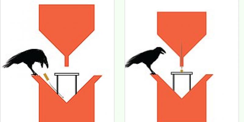Pays-Bas : le Crowbar ou comment entraîner des corbeaux à ramasser les mégots de cigarette