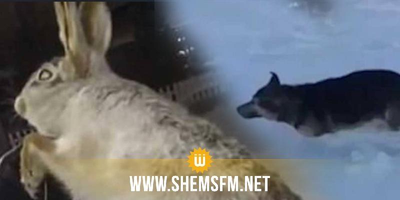 تجمد حيوانات بشكل مروع بكازاخستان