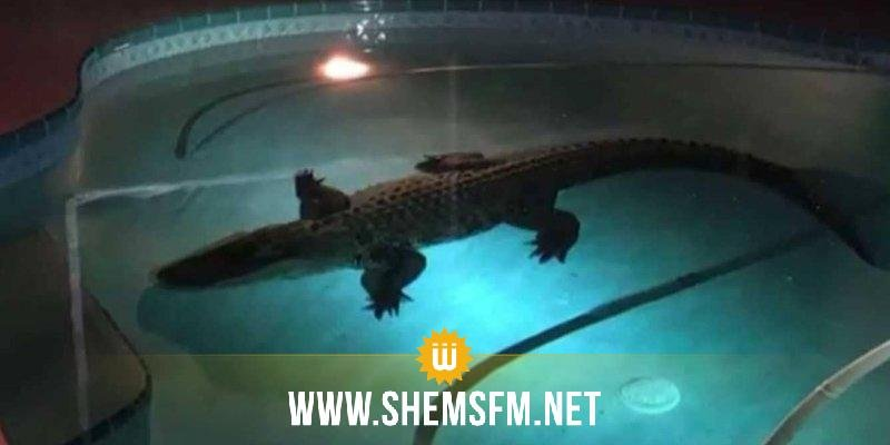 Une famille découvre un alligator dans sa piscine