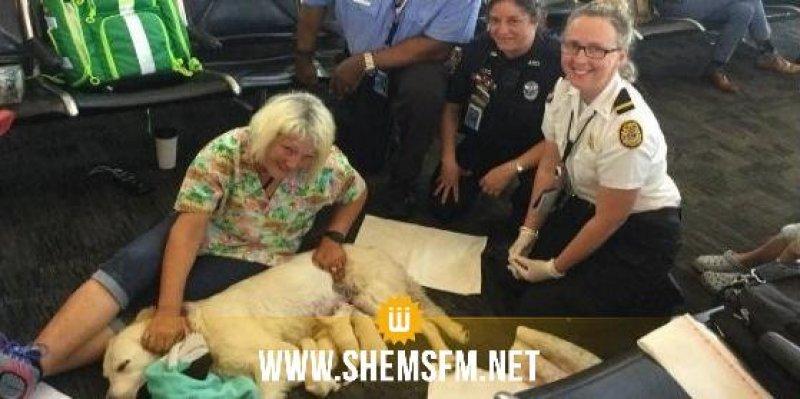 Etats-Unis : huit chiots naissent dans un aéroport (video)