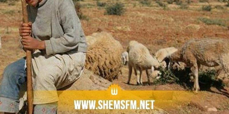 استشهاد الراعي محمد القريري: القرايرية دون ماء والأهالي يتزودون من عين في الشعانبي