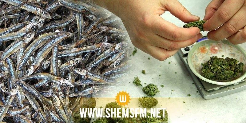 احباط عملية تهريب 5،4 كلغ من الماريخوانا مخفية وسط كميات من السمك المجفف ذو رائحة قوية