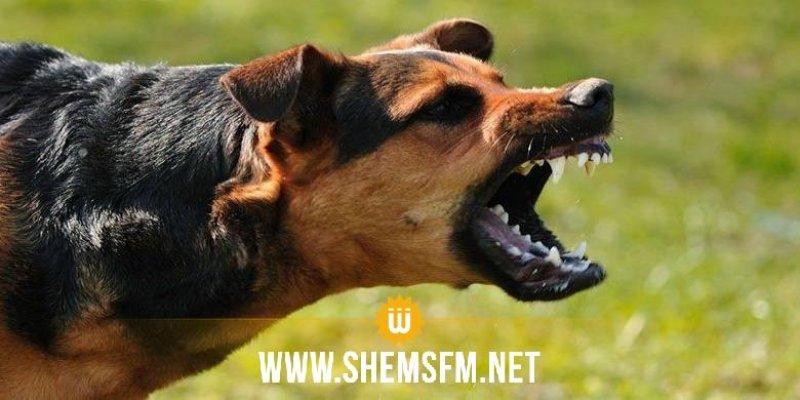القصرين: منطقة عين جنان تمثل بؤرة لداء الكلب الحيواني