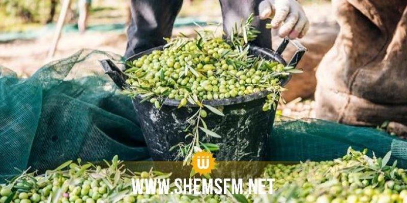 Monastir- cueillette des olives : Démarrage début novembre et une récolte estimée en baisse