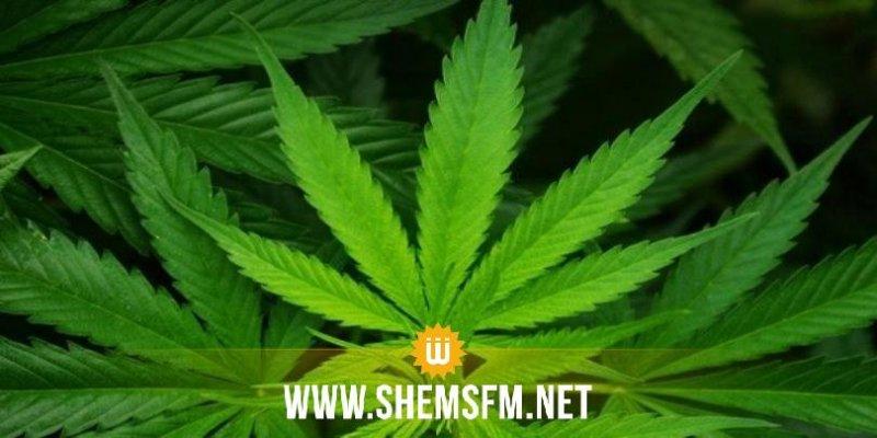 Nabeul : Saisie de la marijuana chez une femme, qui compte en vendre aux élèves