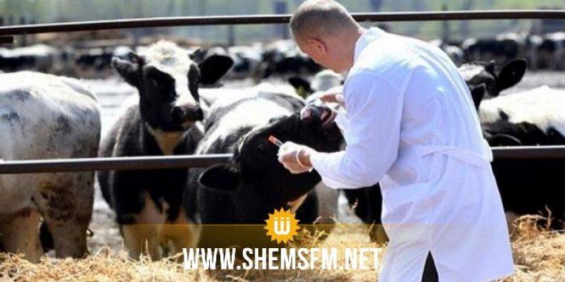 وزارة الفلاحة تدعو إلى تلقيح الحيوانات ضد الحمى القلاعية وتجنب إدخال حيوانات مجهولة المصدر لمنشآت التربية