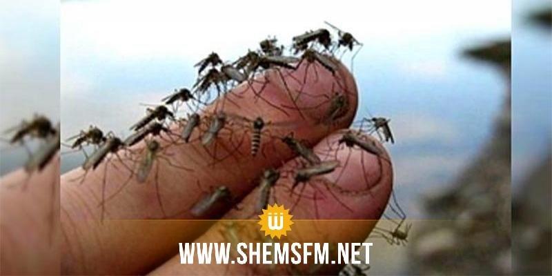 وزير البيئة يعلن عن خطة جديد لمقاومة  الحشرات في فصل الصيف