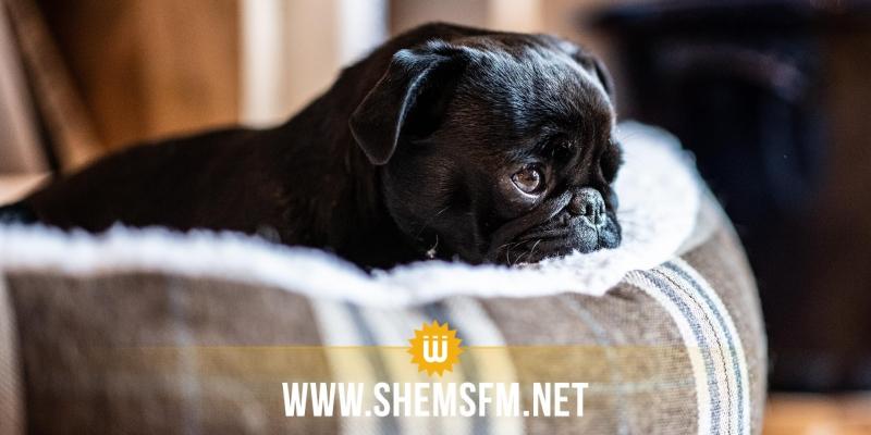 ألمانيا: بلدية تصادر كلبة وتبيعها فتقع في أزمة مع القضاء