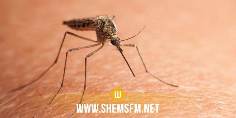 المنستير: تحديد 115 بؤرة تكاثر للحشرات خلال سنة 2019