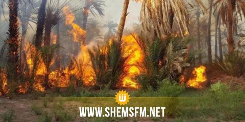 توزر: 8 ساعات للسيطرة على حريق بالواحة القديمة