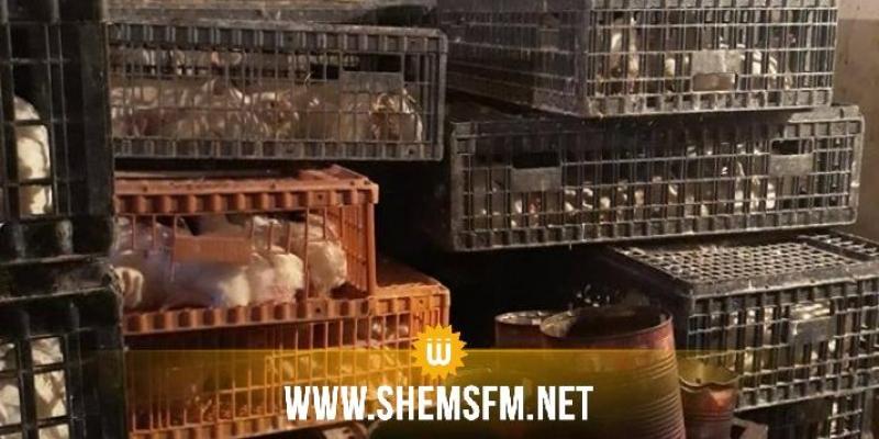 كان يستعمل مياه المجاري في عملية الذبح: حجز كمية من لحوم القطط المذبوحة المعدة للبيع (صور)
