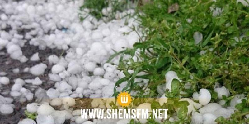 جندوبة: تضرر عدة مزارع بسبب البرد والأمطار