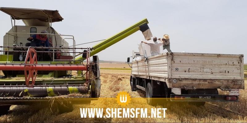 باجة: مراكز تجميع الحبوب الخاصة ترفض قبول المحاصيل في أول أيام الحصاد