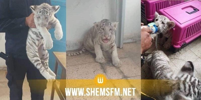 أشبال النمور أخذت من منتزه فريڨيا و متجهة إلى ليبيا في إطار اتفاقية السيتاس