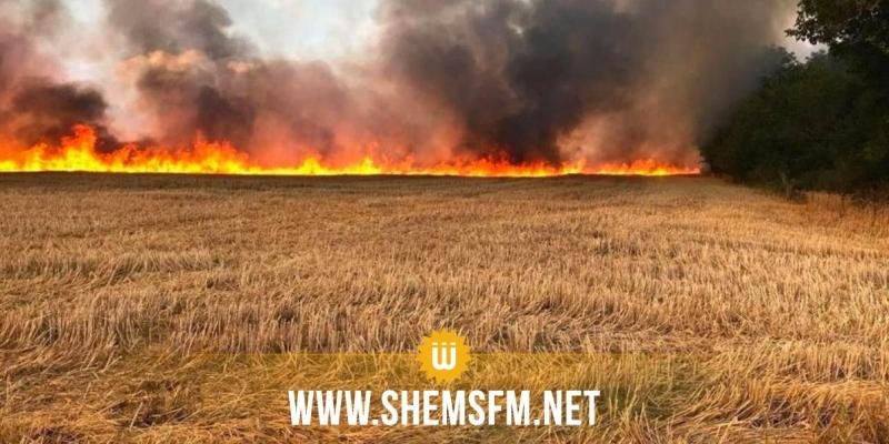 زغوان: حريق بضيعة فلاحية بالفحص يأتي على 50 هكتارا من الحبوب