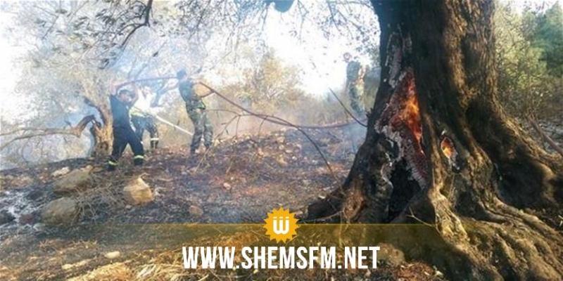 القيروان: حريق يأتي على حوالي 500 شجرة زيتون