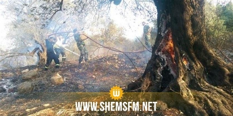 Kairouan : un incendie détruit prés de 500 oliviers