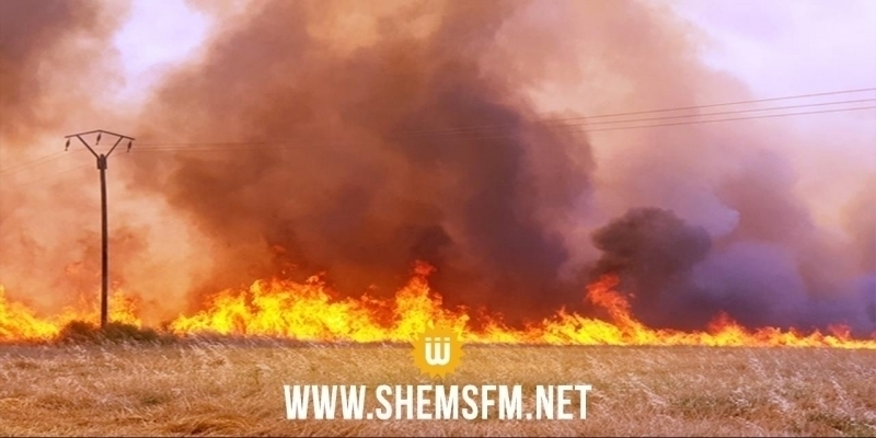 باجة: 104 حرائق منذ بداية جوان تسببت في إتلاف حوالي 230 هكتارا أغلبها من مزارع الحبوب
