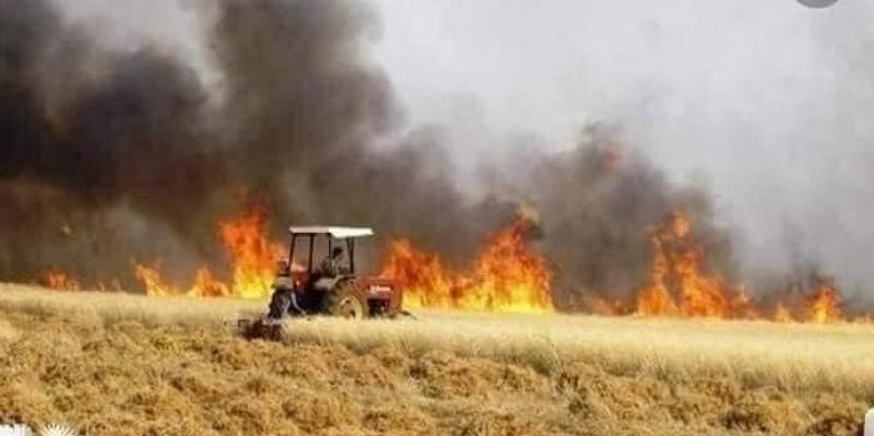 الكريب: حريق يأتي على حوالي 8 هكتارات من الحصيدة و ربع هكتار من القمح اللين