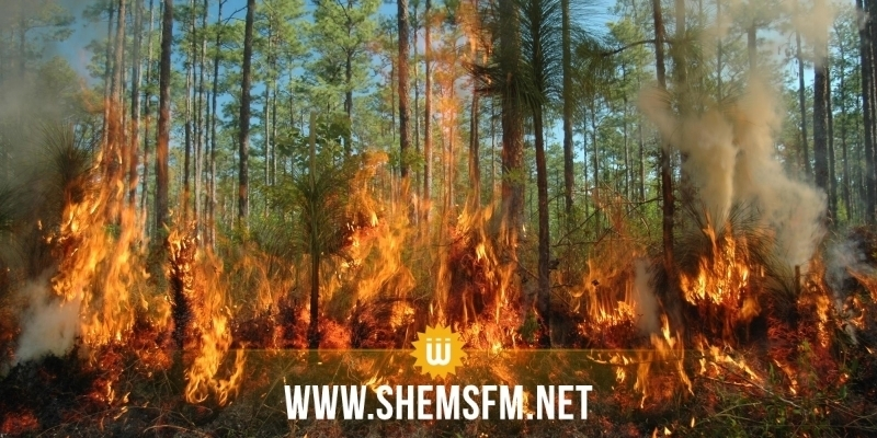 سليانة: السيطرة على حريق جبل السرج الذي أتى على 10 هكتارات