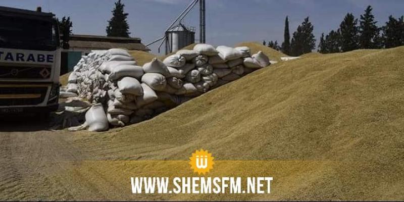 الكاف: صابة القمح تتجاوز طاقة إستيعاب مراكز التجميع