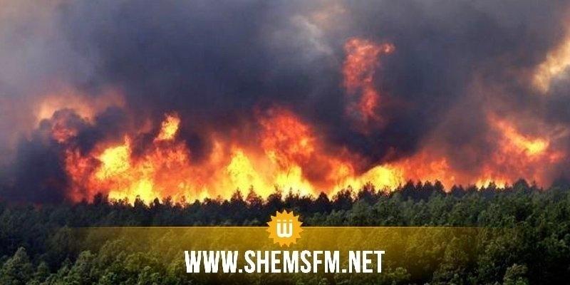 نابل: أعوان الحماية المدنية يواصلون التدخل للسيطرة على الحريق في غابة البندق