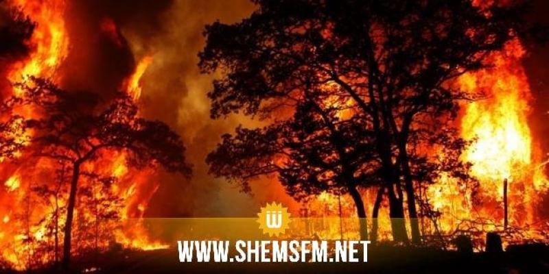نابل: النيران تأتي على أكثر من 100 هكتار من غابة  البندق