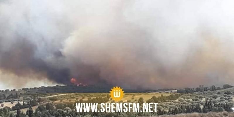 Nabeul : maîtrise d'un incendie qui a ravagé une forêt de pins