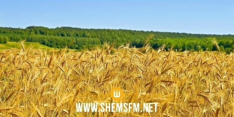 جملة من الإجراءات لإنقاذ صابة الحبوب