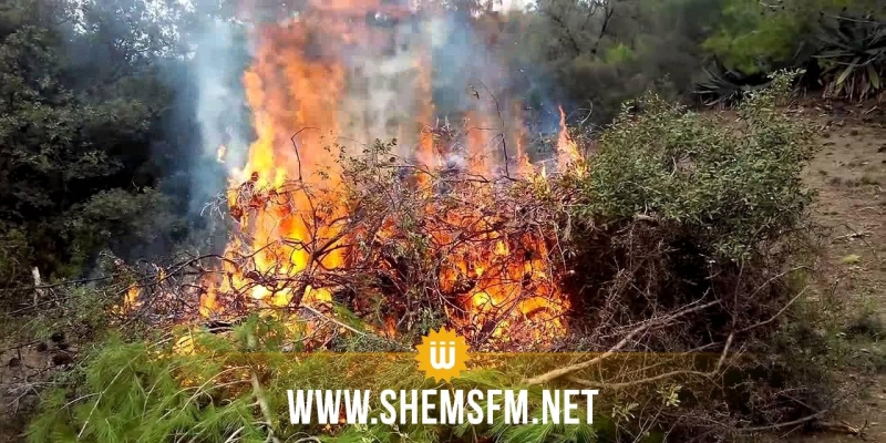 باجة: السيطرة على حريق 'جبل صباح' بعد إتلافه 20 هكتارا من الغابات