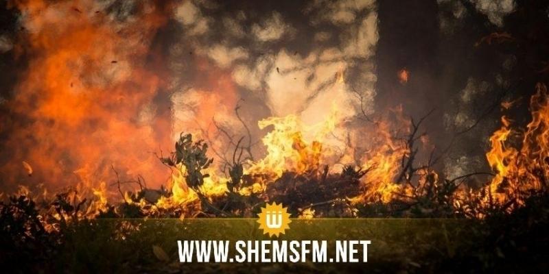 Ghzela : l'incendie à la région de Rkab maîtrisé