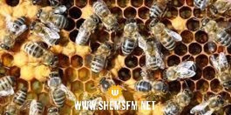 النوم مع النحل.. طريقة جديدة لعلاج آلام الظهر