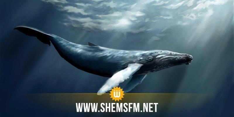 توسكانة: الحصبة تقتل عشرات الحيتان