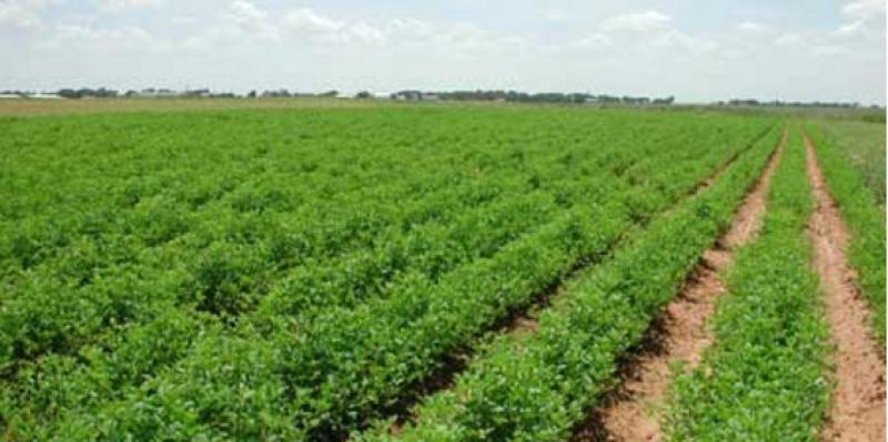 زغوان: استرجاع 98 هكتارا من الأراضي الدولية في بني دراج