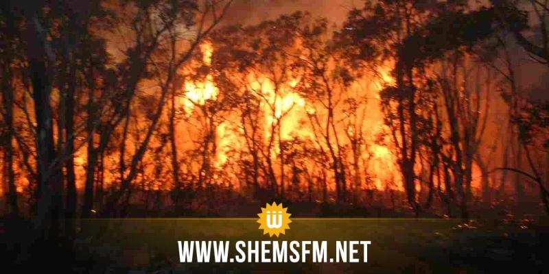 باجة: حريق جبل صباح يتسبب في إتلاف 160 هكتارا من أشجار الديس والصنوبر