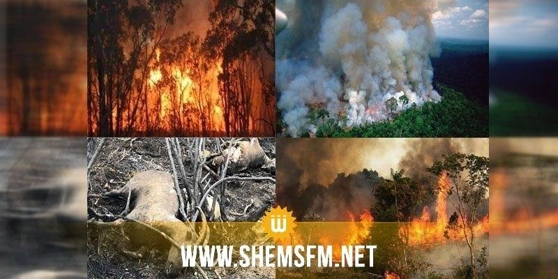 الاتحاد الأوروبي يعرب عن قلقه إزاء حرائق الأمازون