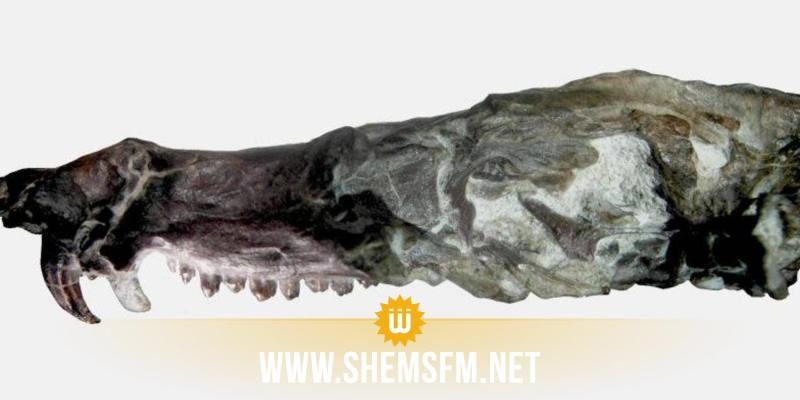 عمره 230 مليون سنة: إكتشاف سنجاب العصر الجليدي