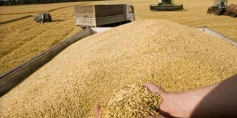 وزارة الفلاحة: نسبة ضياع صابة الحبوب للموسم الحالي أقل مقارنة بالمواسم المنقضية