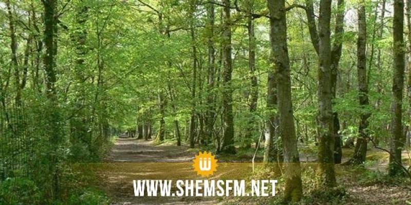 وزارة الفلاحةتسعى لوضع نظام أساسي خاص بأعوان الغابات