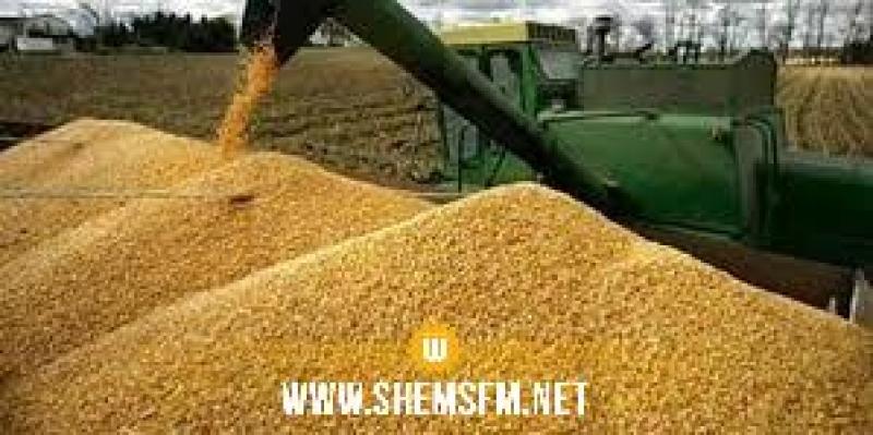 ديوان الحبوب: محصول الحبوب يغطي الحاجيات الوطنية إلى غاية فيفري 2020