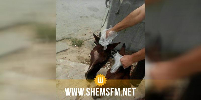 أكودة: أكثر من 5 رؤوس خيول في مصب الفضلات