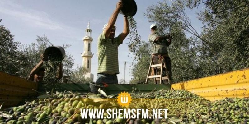 مدنين: صابة الزيتون للموسم الحالي تقدر بـ55 ألف طنا