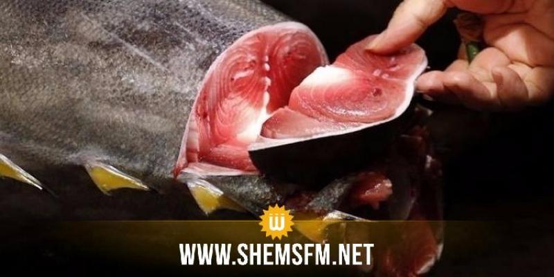 مدنين: حجز 1.6 طن من سمك التن الأحمر المحجّر صيده