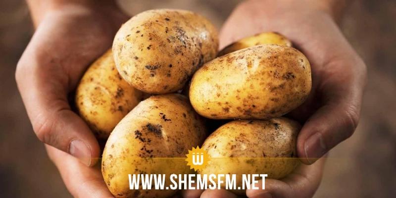 منتجو البطاطا يدعون إلى إقرار سعر لايقل عن 900 مي/الكلغ عند الإنتاج